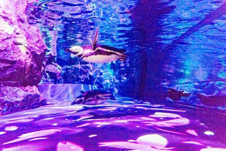 水族館にも春がきた!今年はペンギンと一緒に水中お花見したいなぁ♪
