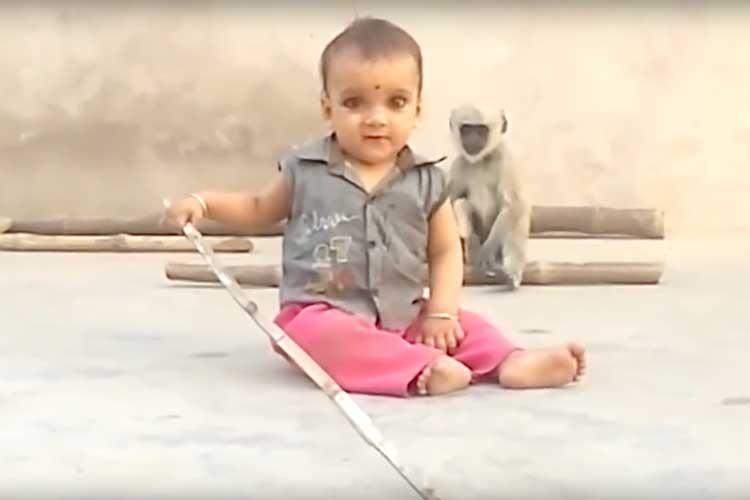 遊びたいのに遊べない。サルのちょっとお茶目で大人な行動に胸キュン♪