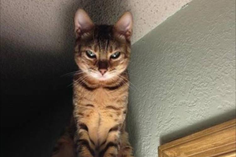 あなたの後ろでじっと見つめている...恐怖を感じる猫画像7(にゃにゃ)選