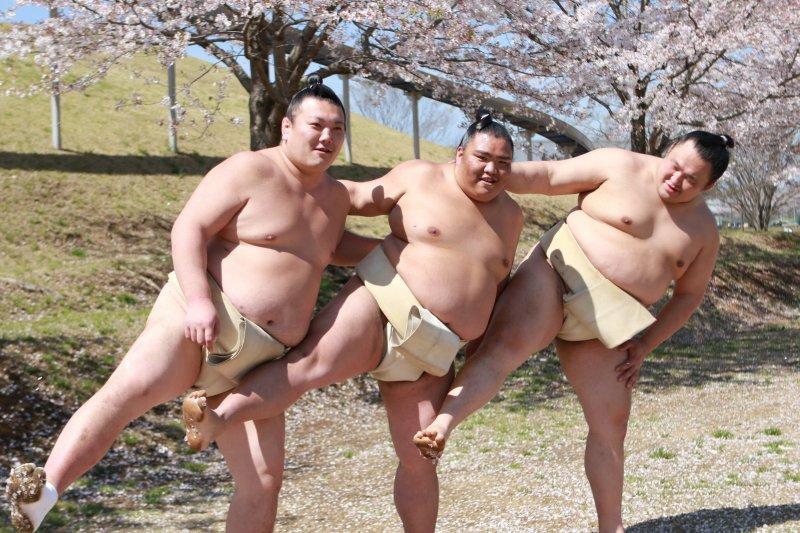 麗らかな桜の下でお相撲さんが「はいポーズ!」春の喜びを全身で表現している写真が話題に!