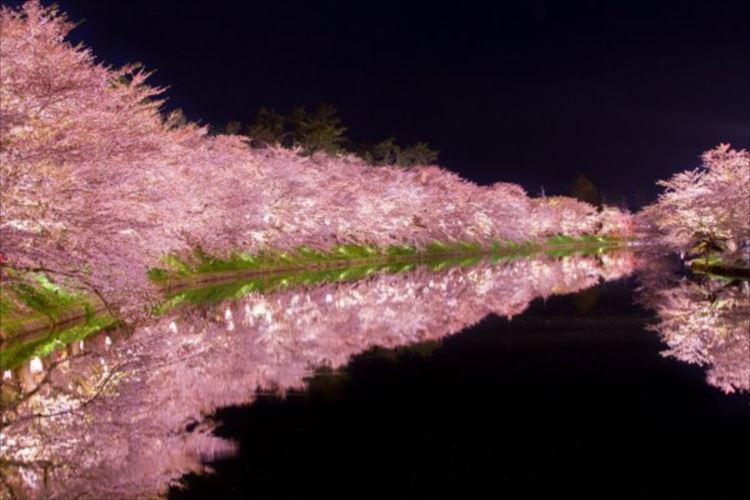 弘前公園の夜桜が美しい。水面に写る桜に心奪われる