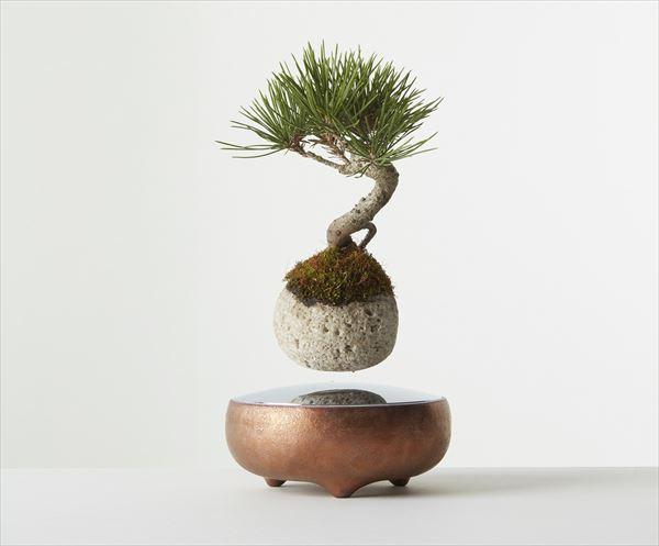 bonsai_01_600