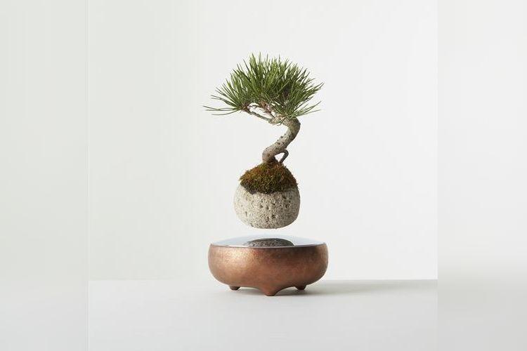 【世界初】クルクル回りながら宙に浮かぶ盆栽『空中盆栽』が三越伊勢丹で買えちゃう!