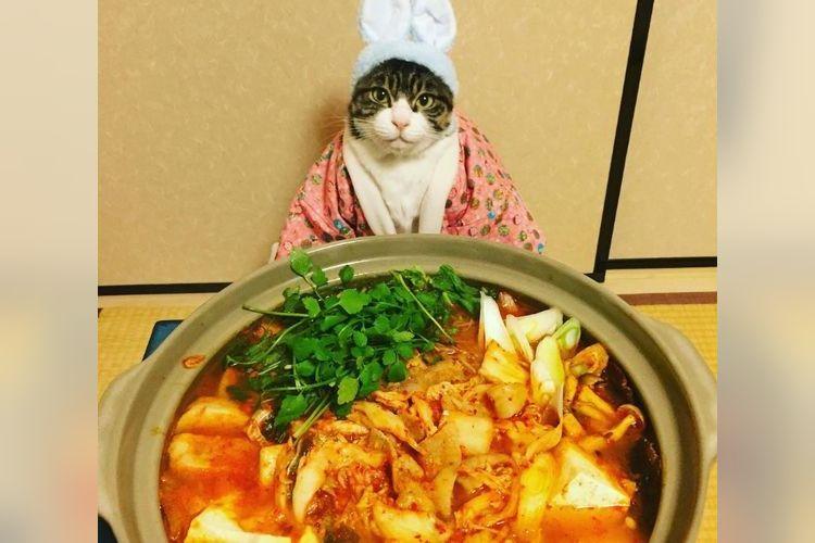 「一緒にあったまらニャイ?」料理に合わせてコスプレするニャンコが可愛すぎ!