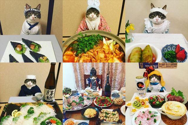 cat_top3_640
