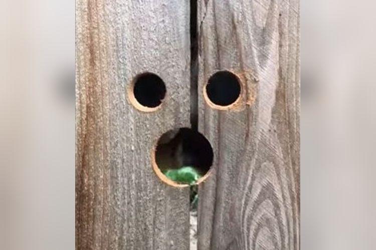 ワンコのために穴を3つ開けてみた…すっぽりハマって超可愛い姿に