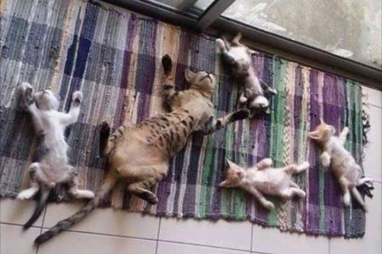 そっくりやん…(笑)集団で眠るニャンコたち、寝姿が完全に一致するの巻