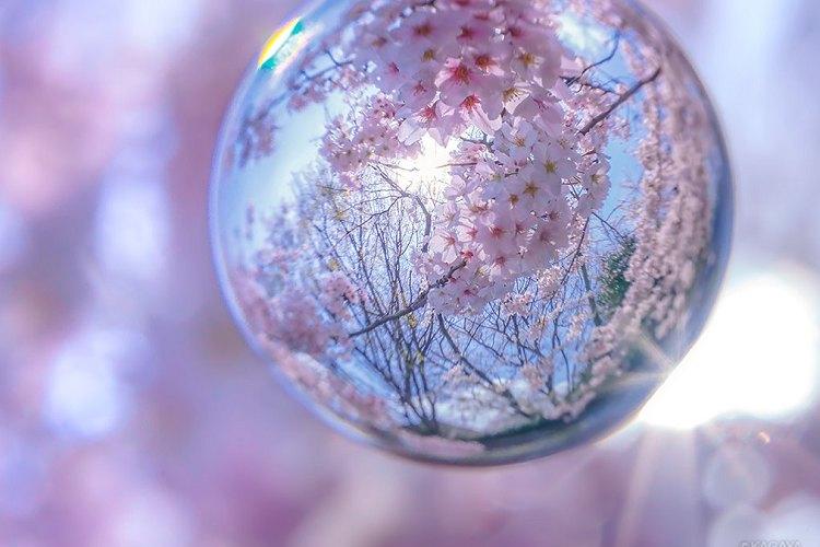思わずため息…ガラス玉に桜を閉じ込めたかのような写真が、うっとりするほど美しい