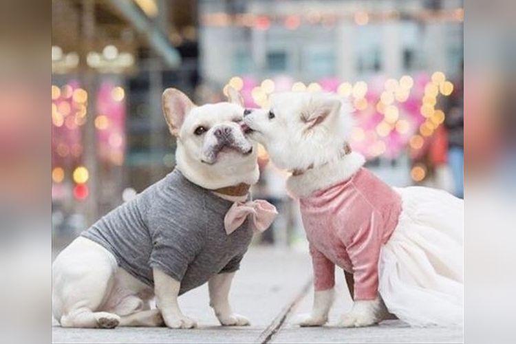 こっちまで幸せな気持ちになるね!犬種を超えたカップルの愛にほっこり