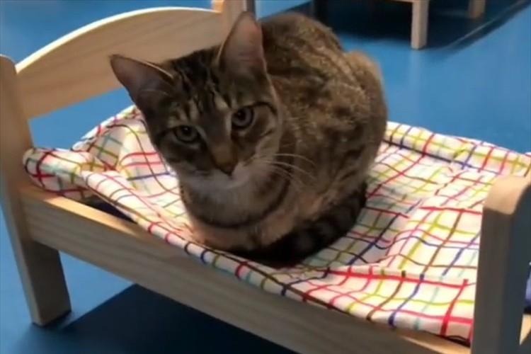 「ちょうどいいサイズだニャ」IKEAが動物保護施設にいる猫たちのため、10個の人形用ベッドを寄付