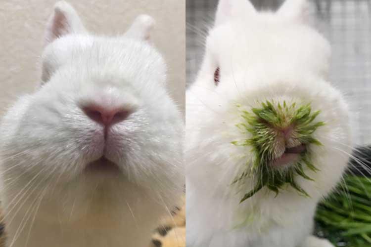 何だこの緑は!? うさぎさんが生チモシーを食べたら、青汁を飲んだみたいになっちゃった