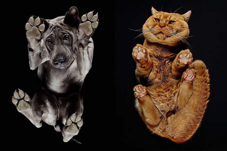 何見てるニャ! 動物を下から撮影してみたら、とってもキュートだった…写真集やTシャツにも発展!