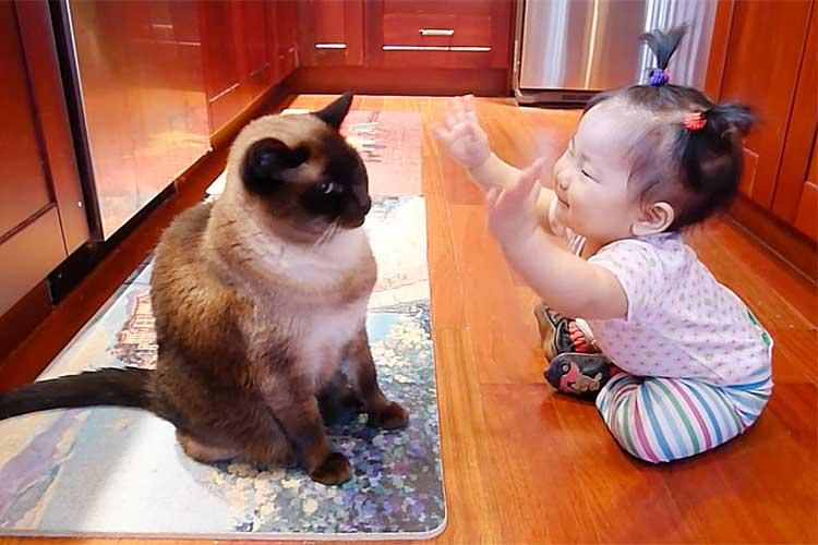 天真爛漫な赤ちゃんのおしゃべりに危機感を感じた!?ニャンコ 微笑ましい光景も最後には…