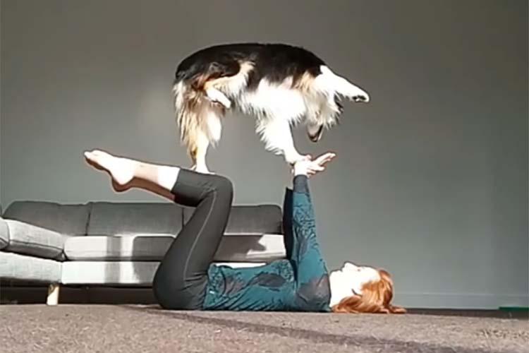【動画】飼い主とヨガをするワンコ。いやいや、実は期待以上のことをやってくれるんです!