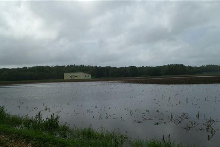 台風で水没した去年の北海道の畑…ポテチ品薄の原因がリアルに伝わる写真に反響