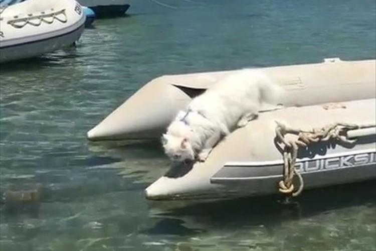 モフモフのニャンコが海へ落ちちゃった…大丈夫か!?と心配するも、優雅なスイミングを披露♪