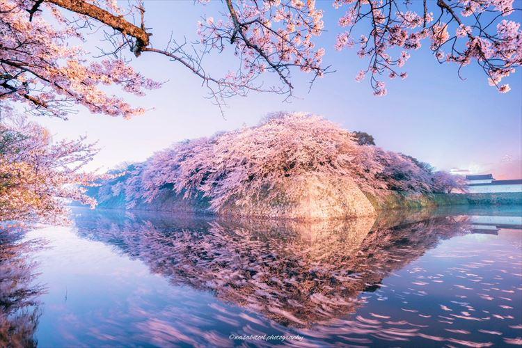 深夜3時過ぎの滋賀県彦根城…暗闇の中に浮かび上がった幻想的な桜に見入ってしまう