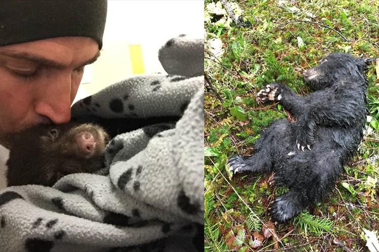 犯罪になるリスクがあるにも関わらず瀕死の子熊を保護した男性を世界が称賛