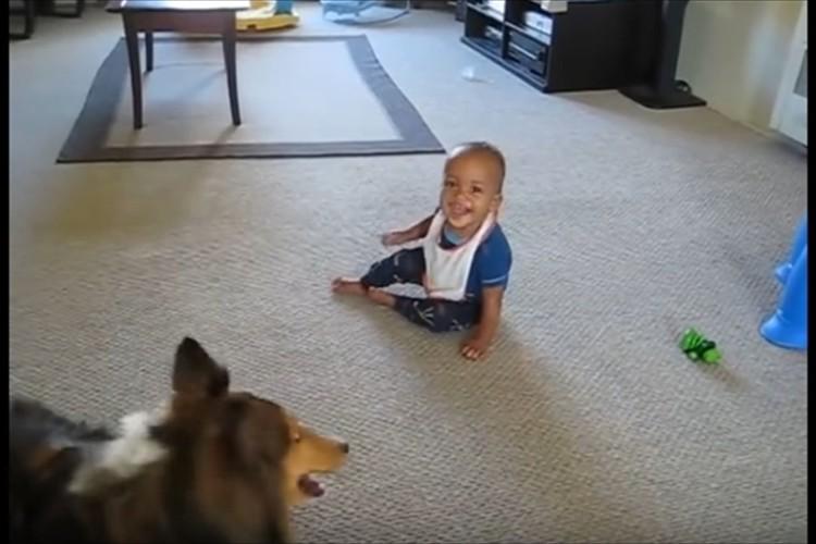 メッチャ笑う赤ちゃんと、赤ちゃん笑わすためにメッチャ頑張る犬がどっちもかわいい