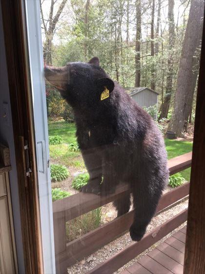 bear_02_420