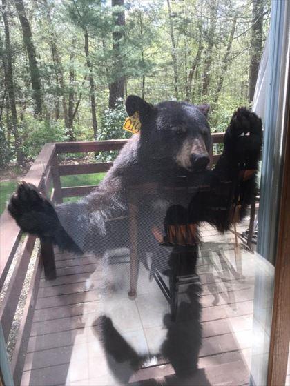 bear_03_420