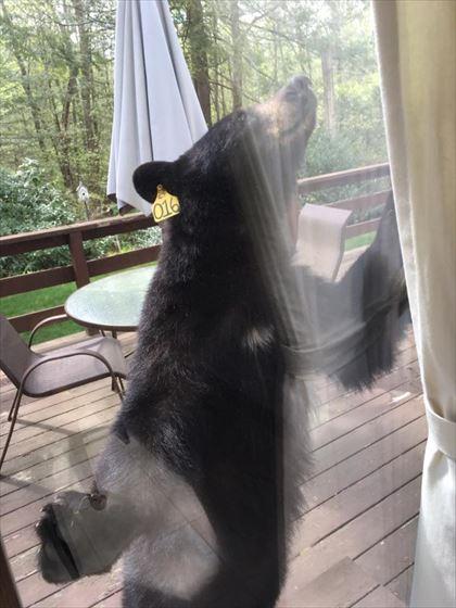 bear_04_420