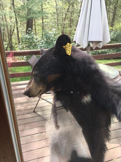 bear_05_420