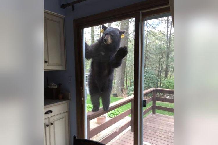 森の中で朝早くからブラウニーを作っていたら、招かれざる客が「こんにちは!」
