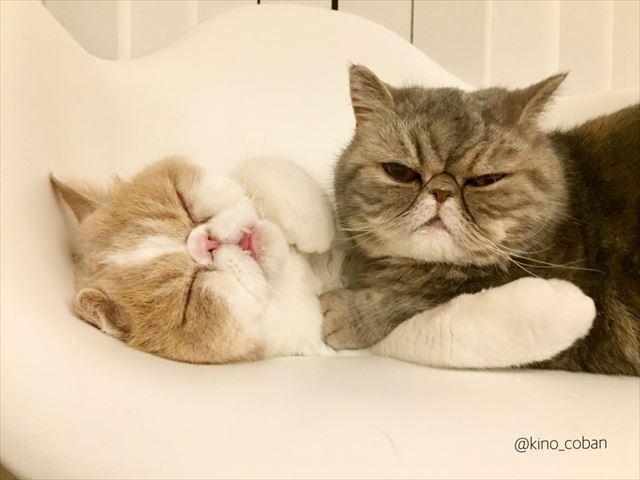 cat_02_640