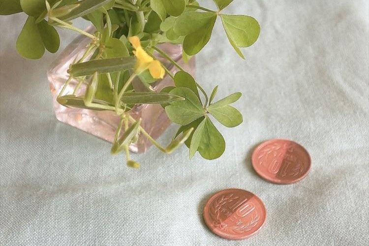 カタバミの「10円磨き」を知ってますか?今の子どもたちに教えたくなる草花遊びが話題に