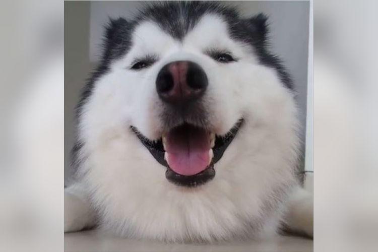 甘い笑顔が超カワイイ~!でも真顔になると…ギャップが激しすぎて惚れちゃう!