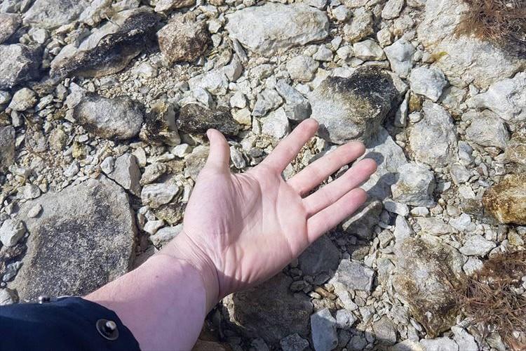 ただ手を伸ばしているだけ…?実は、この写真にある驚愕の事実が隠されていた!