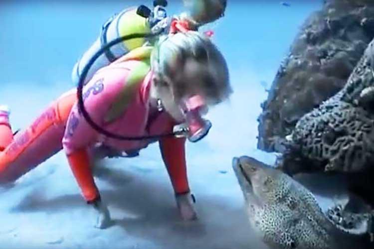まるでペットみたい!巨大なウツボが犬猫レベルでダイバーに懐く光景に驚愕!