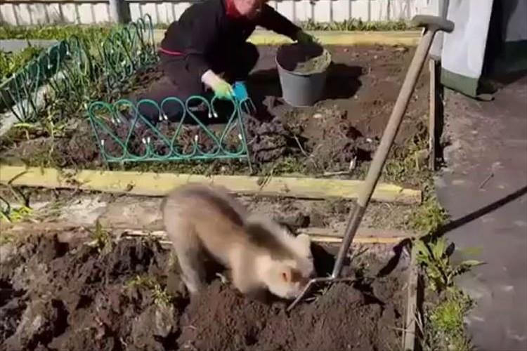 畑仕事を手伝っているのはクマの赤ちゃん!? 女性の方をチラチラ見て真似する姿が可愛いらしい♪