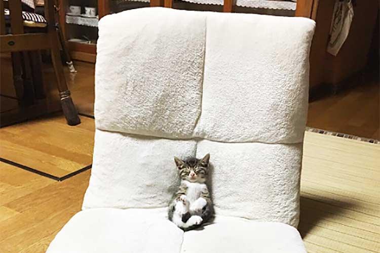 何この比率!? おっきな座椅子でちっちゃなニャンコがウトウト…後ろ足を組んでいるのも可愛い♪
