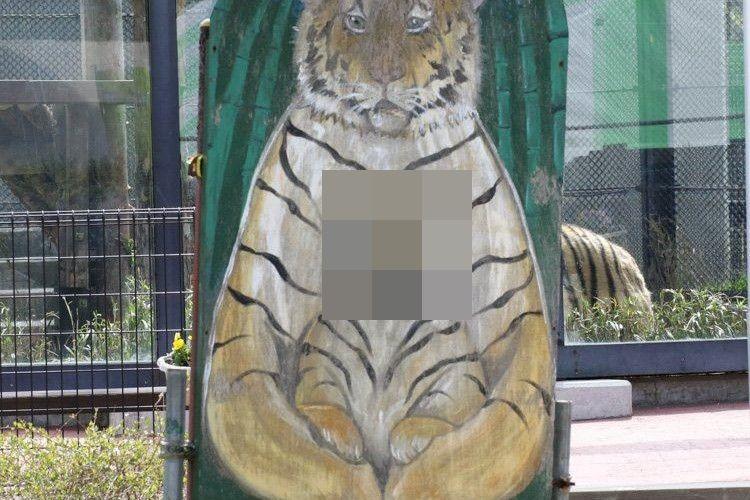 【奇跡の1枚】トラの顔出しパネルで発生した珍事が話題に! ジャストフィットなのに違和感!?