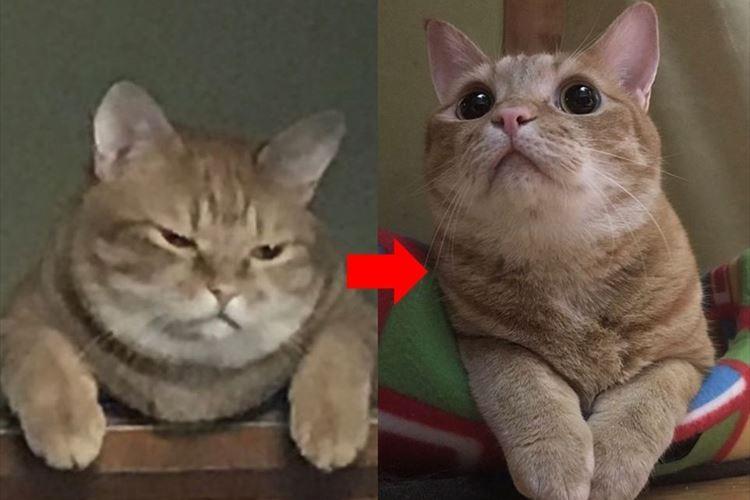 """ごはんをあげ忘れてしまったら""""激おこ""""だった愛猫→あげたら、こうなった♪"""
