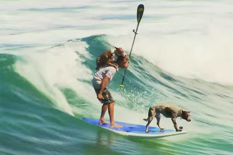 【動画】2匹の犬がサーフィンで驚きのパフォーマンス!その訓練には深い理由が…