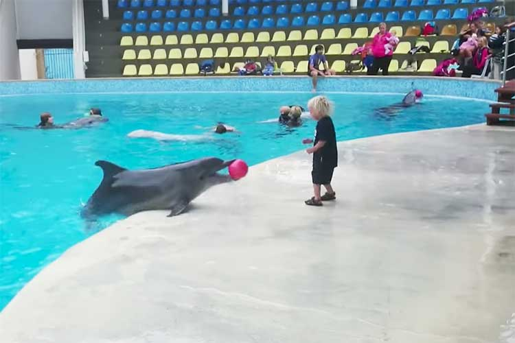 イルカのコントのようなツッコミに爆笑!少年とイルカのキャッチボールに友情を感じると話題に!