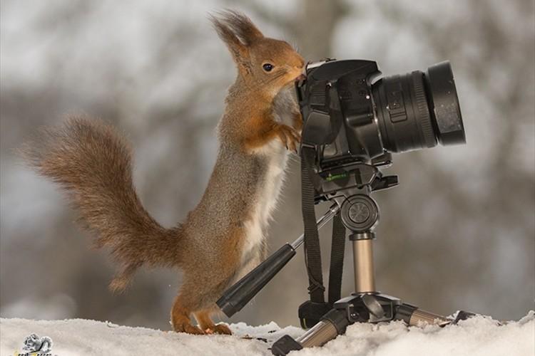 リスに撮り返される写真家が撮影したリス写真が可愛すぎる