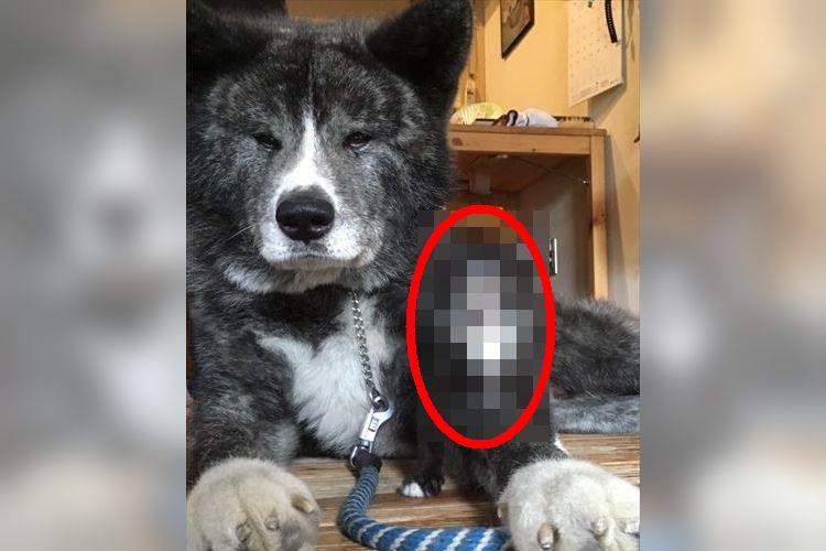 「弟分ができました」突然現れた迷い猫が愛犬にそっくりだった!