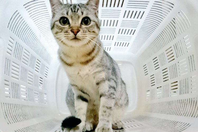 【宇多田ヒカル】未来感パネェ…猫を『アレ』に入れたら超カッコよかった【ジャミロクワイ】