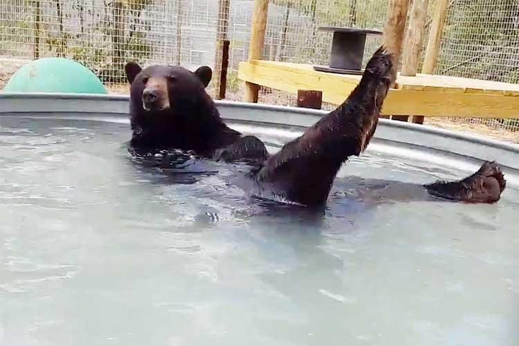 いい湯だな〜♪まるでオッサンのようにお風呂で寛ぎ、子どものように遊ぶクマが可愛いと話題!!