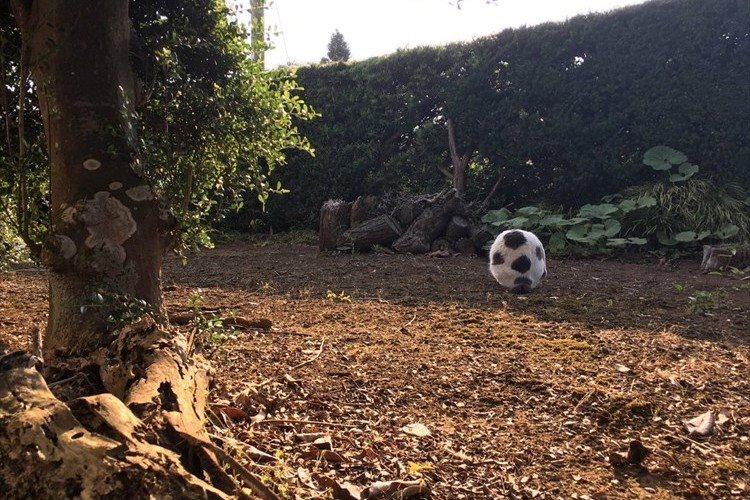 「ずいぶんモフモフしたサッカーボールだな~」と思いきや、正体は我が家の重鎮だった