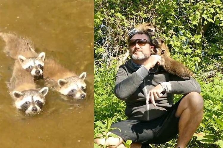 懐かれすぎだろ!! 3匹のアライグマに気に入られたオッサン…釣りどころじゃなくなった