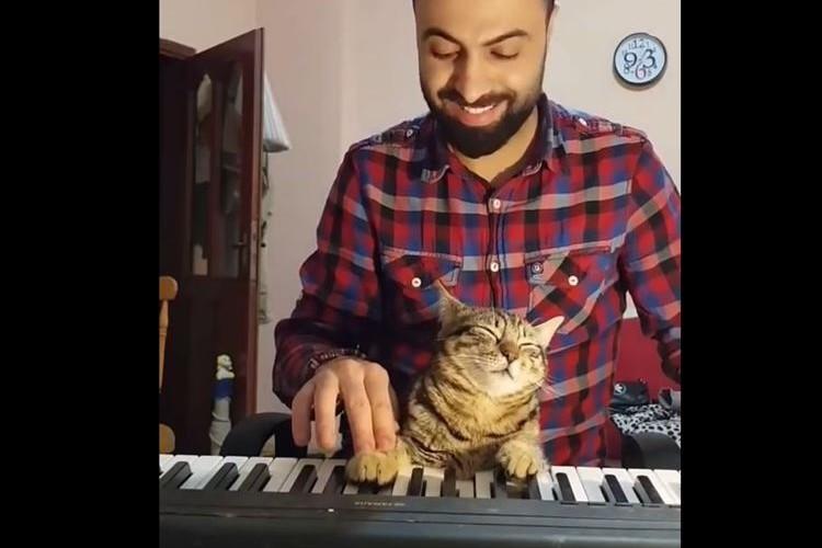 おぉっ!! 猫のピアニストが登場!?と思いきや、音色が心地いいのか眠っているだけだった