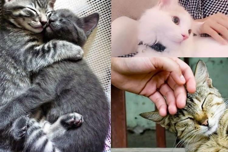 猫好きにはたまらない!? とある動物病院が驚きの求人を募集!『猫をなでる』仕事で年収300万程度