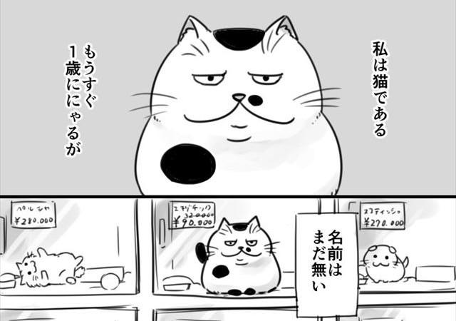manga_top