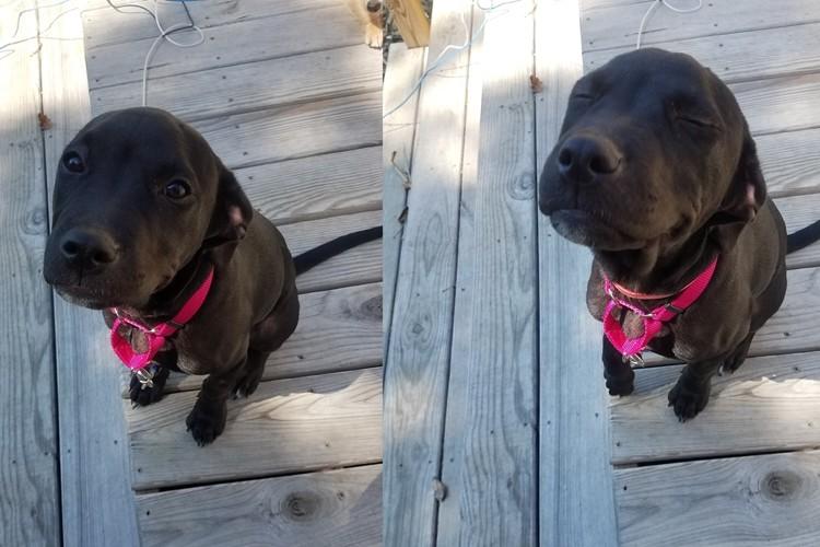 「Good Girl」と褒められた後の犬の表情に全米が癒された!