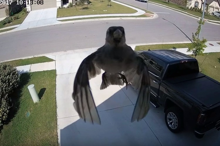 【不思議映像】羽ばたいていないのに空中を浮遊する鳥の映像が話題